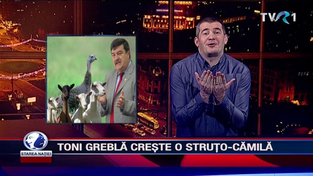 TONI GREBLĂ CREȘTE O STRUȚO-CĂMILĂ
