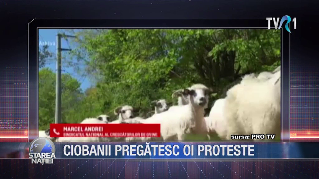 CIOBANII PREGĂTESC OI PROTESTE