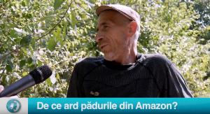 Vax populi: De ce ard pădurile din Amazon?