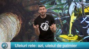 Uleiuri rele: azi, uleiul de palmier